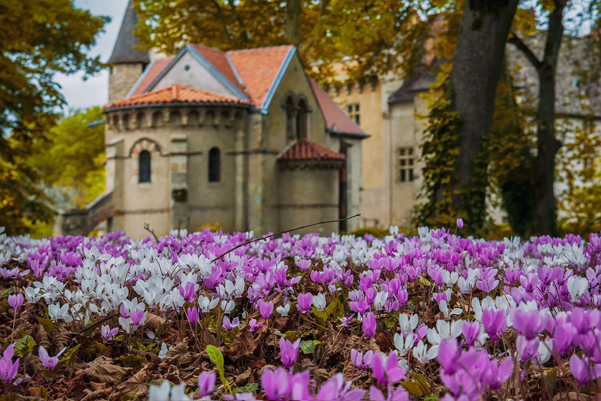 03-cyclamens-au-chateau-alteribes-couleurs